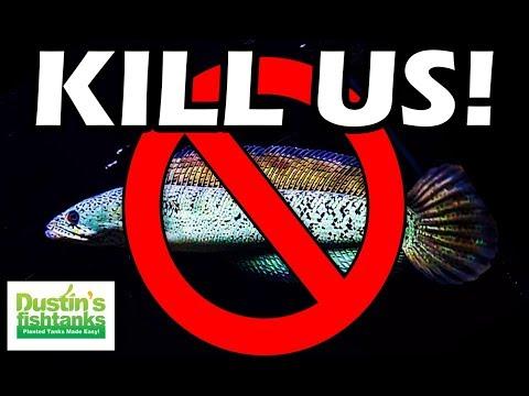 INVASIVE and ILLEGAL Wild Aquarium Plants and Fish (Snakeheads!)