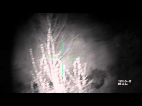 Hog hunting Night   big pig up close   ATN X-Sight HD White mode