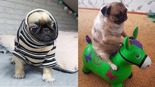 Cutest Pug Puppies Video Compilation  Funny Pug Compilation