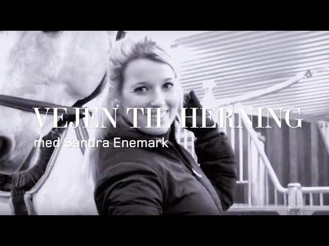 Vejen til Herning - Del 2 // Herning Horse Show 2017