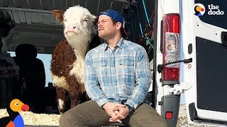 Guy and His Cow Drive Across The U.S. in a Van | The Dodo