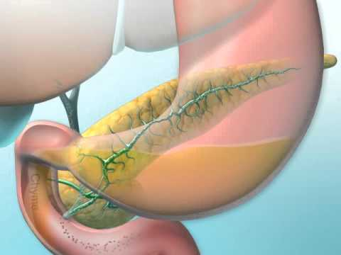 Dual Roles of the Pancreas