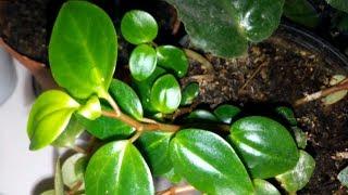 Комнатные растения. Обзор