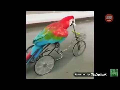 Komik kuşlar#2