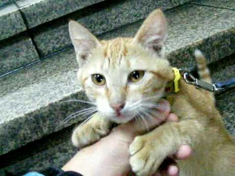 韓国 プサン プサンデパートの飼い猫 부산 백화점의 고양이