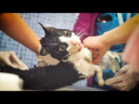 Kitty brought to the hospital with terrible injuries after freak attack