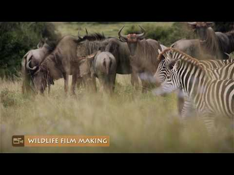 Wildlife Documentary Film Making Training Program