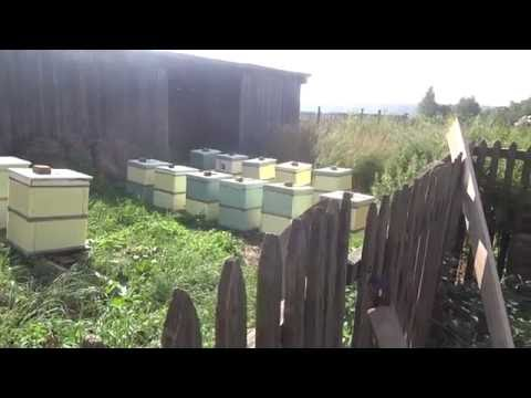Перевозка пчел в ульях из пенополистирола сделанных своими руками Моя первая кочевка
