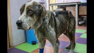 "Спасение собаки, приют ""Шанс"" и клиника ""Ветеринар"""