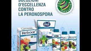 Zoxamide: soluzioni d'eccellenza contro la Peronospora