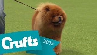 Utility Dog - Group Judging And Presentation | Crufts 2015