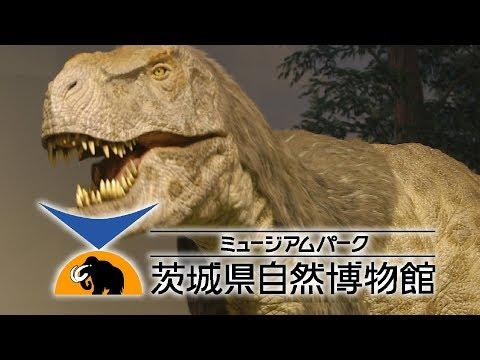 ミュージアムパーク茨城県自然博物館 坂東市2017年リニューアル Ibaraki Nature Museum