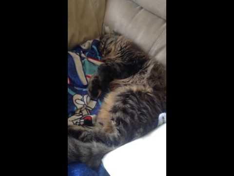Extreme sleeping kitty twitches
