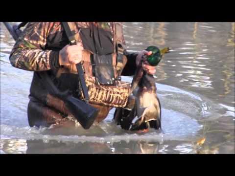 2016 Green Timber Duck Hunting Arkansas with Banded Mallard Company
