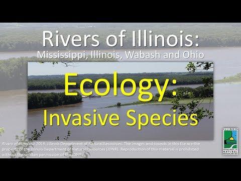 Rivers Of Illinois: Ecology: Invasive Species