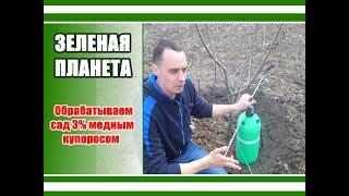 спасаем сад от грибковых заболеваний / Обработка сада медным купоросом