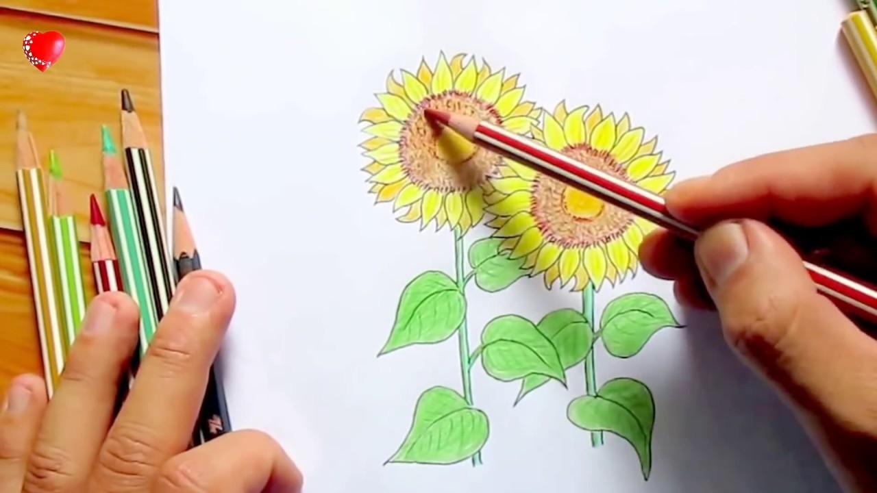 Vẽ hoa hướng dương đơn giản bằng chì màu.