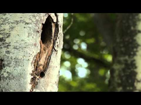 Schitterende Natuurfilm