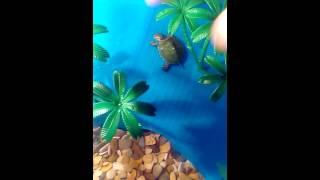 Красноухие черепахи, маленькие. Прикол!