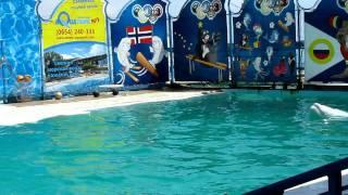 Ялта.Акватория.Театр морских животных. июль2011г.А.Э