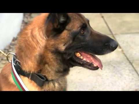 War dog Mali awarded medal for bravery