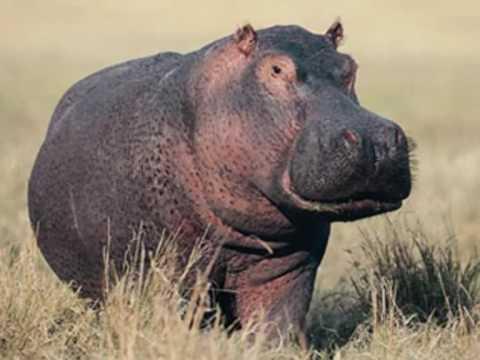 Gayla Peevey..........I Want A Hippopotamus For Christmas - YouTube
