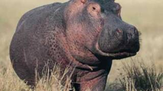 Gayla  Peevey..........I Want A Hippopotamus For Christmas