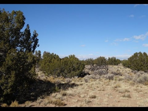 60 Acres $19,000 Saint John's, AZ.  Covered in Junipers and Lots of Privacy Close to