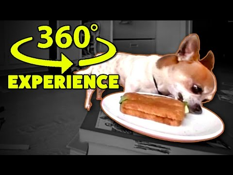 Watch the Sandwich from my Chihuahua!  360 VR Experience