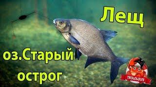 Лещ озеро Старый Острог