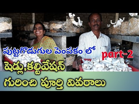 Mushrooms cultivation shed and suggestion's. Best way for unemployed persons