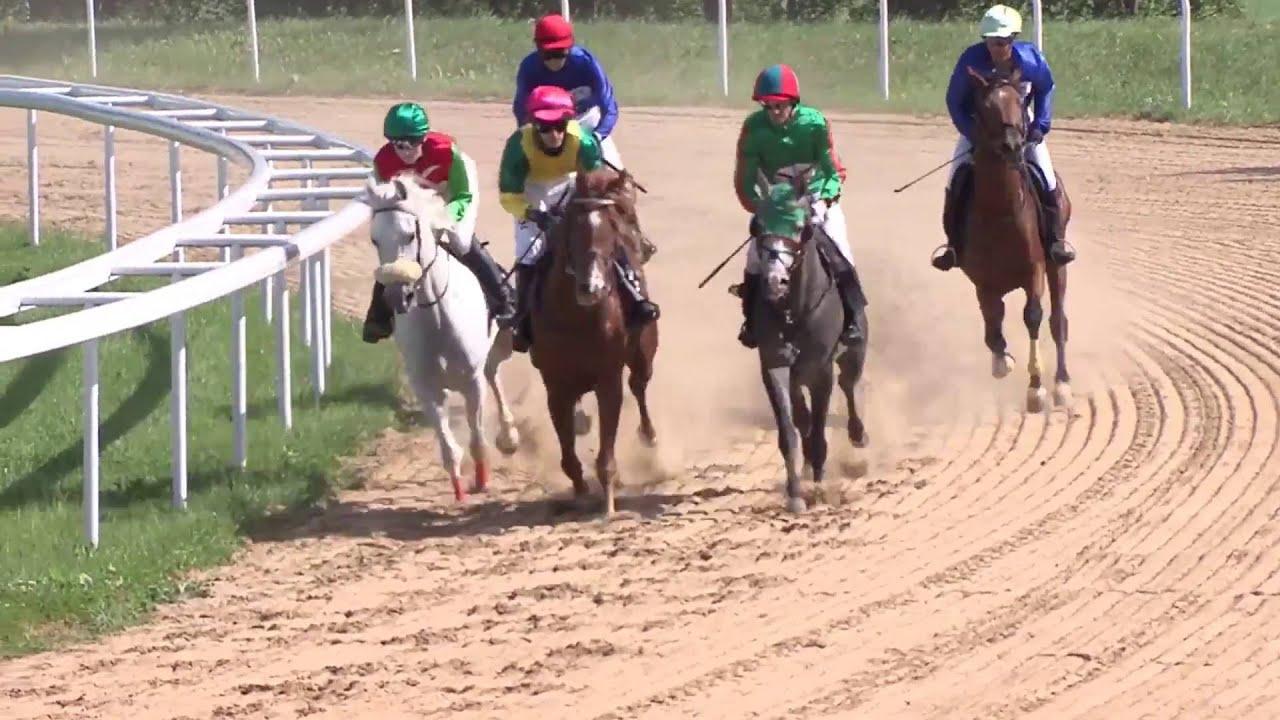 žirgų lenktynės vykdant prekybos strategiją)