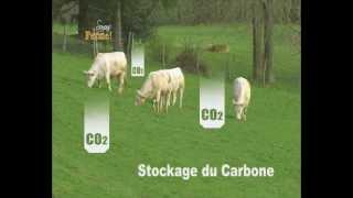 Méthane bovin et changement climatique - le poids de l'élevages dans les émissions de GES