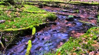 Hör Bild - Naturgeräusche - Kleiner Bach im Wald -  Sounds of Nature