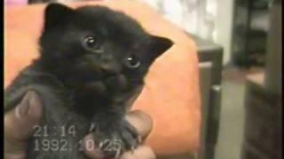 母猫ピンは、ものすごく慎重で、子供たち(きんた、かんた、クロミ)か...