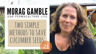Two Methods to Save Cucumber Seeds with Morag Gamble