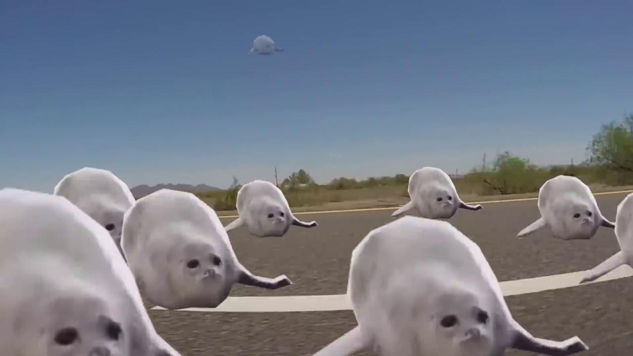 викторианском прыгающие тюлени гифка его упорно