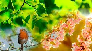 Звуки леса, Соловей, речка, первые цветы, Весенний лес.
