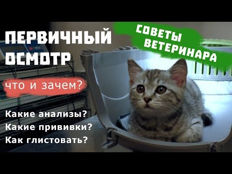 ПЕРВИЧНЫЙ ОСМОТР КОТЕНКА | Советы ветеринара / Какие прививки для котенка?