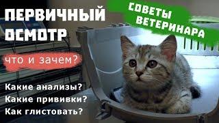 ПЕРВИЧНЫЙ ОСМОТР КОТЕНКА   Советы ветеринара / Какие прививки для котенка?