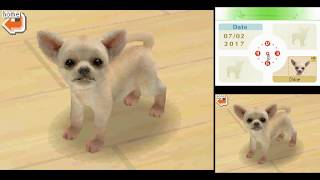 Let's Try [DS 0089] - Nintendogs: Chihuahua & Friends