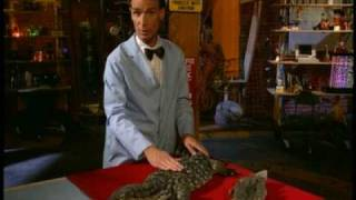 Bill Nye, the Science Guy: Cold-Blooded Reptiles thumbnail