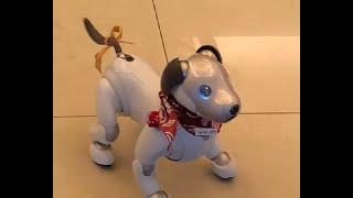 高橋ぽち。日本最北 #稚内 生まれ、#札幌駅北口 育ち。尊敬する #樺太犬...