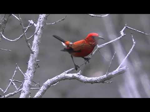 Keanakakoi Crater Bird life