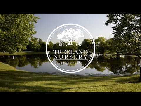 Welcome To Treeland Nursery 50 Acre Tree Farm In North Texas
