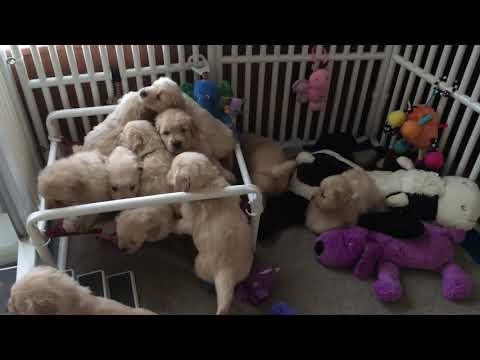 8 little puppies in the bed. Roll over!  Roll over! and one fell out...