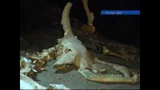 Невероятная находка в пещере Эмине-Баир-Хосар(, 2013-02-14T08:17:22.000Z)