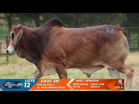 LOTE 12   EAOC 581