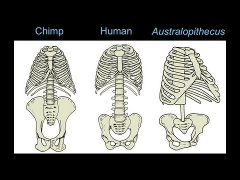 CARTA: The Upright Ape: Bipedalism and Human Origins -Footprints Body Form and Locomotion