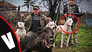 """Los perros """"PAMPA"""" Una cruza de Dogo argentino y PITBULL (Veneno Dogs)"""